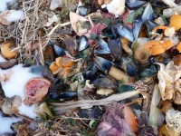 Compost, Mussel Shells, 2011