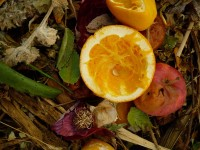 Compost, Orange and Red Onion, 2010