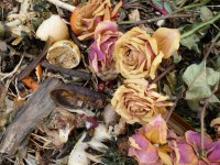 Compost, Roses and Bee, 2011